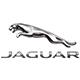 Jaguar en Nuevo León, México